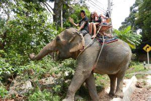 Elefantenreiten im Dschungel von Thailand
